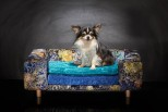 Pet Sofa La Couture Palace - Cobolt Blue