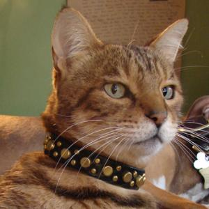 The Garfield Deluxe Cat Collar on Cat