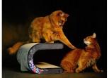 Le Tonneau Cat Furniture