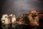 Metis Art Pet Faux Fur Throw Blanket with Jean Paul Galtier Fabric