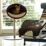 Rondo Stand, a Designer Cat Tree [Leather]